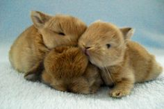 Baby Bunnies Cuddle