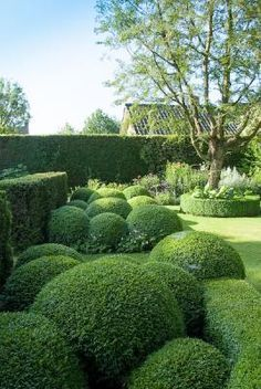 Boxwood Hedge Topiary: this would look fantastic near the kitchen end of the house, how perfect ! Boxwood Garden, Boxwood Hedge, Topiary Garden, Boxwood Topiary, Herb Garden, Vegetable Garden, Modern Landscape Design, Modern Landscaping, Landscape Architecture