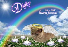 #Digby @Digbythecat Candlepage: http://www.gratefulness.org/candles/candles.cfm?l=eng&gi=Digby