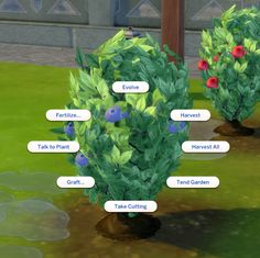 Mod The Sims - Harvestable Blueberry Plant