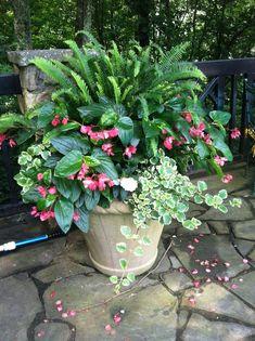 Stunning Shade Garden Design Ideas >>> Figure out more at the image link. Stunning Shade Garden Design Ideas >>> Figure out more at the image link. Diy Gardening, Organic Gardening, Container Gardening, Flower Gardening, Vegetable Gardening, Container Vegetables, Gardening Zones, Succulent Gardening, Gardening Supplies