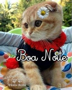 #Nilzagifsanimados: Boa noite! Animals And Pets, Cute Animals, Pokemon Movies, Universe Quotes, My Emotions, Steve Jobs, Cool Cats, Kittens Cutest, Good Night