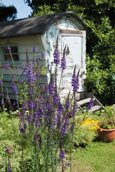 Old shed...makes a perfect garden element