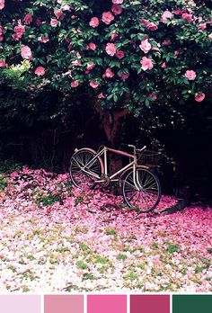 Achados da Bia   Inspiração do dia   Flores   Bicicleta   Passeio