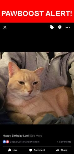 Please spread the word! Leo was last seen in Kansas City, MO 64114.    Nearest Address: Near Sleepy Hollow Rd & E 89 St