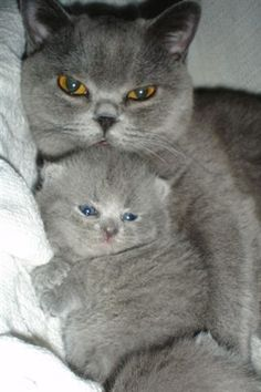 """""""Dis my baby. Yur turn to hold her is neber."""""""
