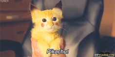 If Pikachu was a really cute kitty