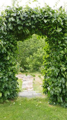 Seks kule klatreplanter du vil lykkes med - Tusenfryden Planter, Herbs, Garden, Garten, Herb, Lawn And Garden, Outdoor, Tuin, Gardens