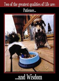 This photo. : ) Funny animal pictures ...For more funny animal memes and humor quotes visit www.bestfunnyjoke...