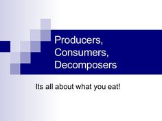 Producers, Consumers, And Decomposers by sth215 via slideshare