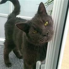 Luke - Cat Rehoming & Adoption - Wood Green Animals Charity