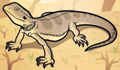 How to Draw a Bearded Dragon, Bearded Dragon Lizard, Step by Step, Reptiles, Animals, FREE Online Drawing Tutorial, Added by Dawn, July 5, 2012, 8:27:19 pm