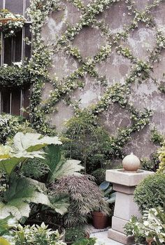 Down the driveway-Star Jasmine trained over a wire lattice grid in an espalier form transforms a bare wall {wine glass writer}