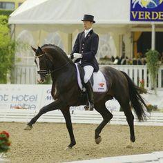 Uptown dressage KWPN stallion