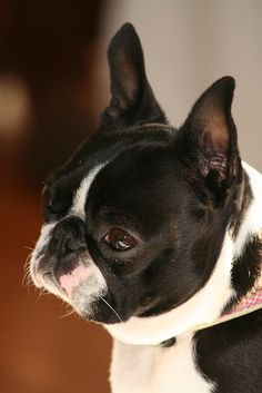 mine. i could kiss this face all day.