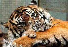 L'amour d'une mère ...