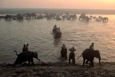 Bruno Barbey. India. Bihar region. Town of Sonpur. Elephants are given their daily bath in the Ganges. 1980.