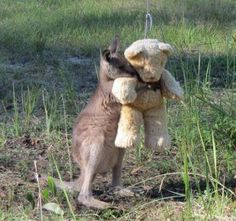 b10304698bc Little kangaroo doesn t want to let go of his new friend.