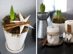 Cute way to decorate simple white candles. (plants are Hyacinths - nice change from the Paperwhites we see everywhere this time of year)