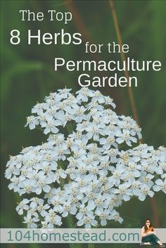 Before launching into 8 super-cool herbs, let's talk about permaculture. It's an ecological design science that is modeled after nature and used for sustainability.
