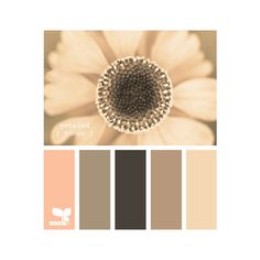 Design Seeds®: For All Who Love Color | Search ❤ liked on Polyvore