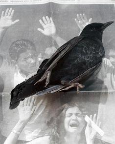 "Geert Goiris, ""Dead Bird"", 2008  http://www.geertgoiris.info"