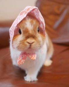 These Bunnies Love To Wear Hats, And We Can't Handle The Cuteness!