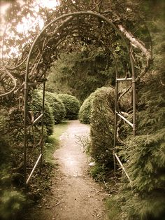 i would love a garden like this in my backyard <3