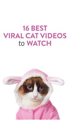 best viral cat videos #fun