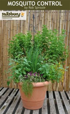 Gardening Container how to plant a bug-repelling container garden - There's plenty of great home improvement and decorating content to enjoy. Outdoor Plants, Garden Plants, Outdoor Gardens, Container Plants, Container Gardening, Plants That Repel Bugs, Fukuoka, Lawn Care, Dream Garden