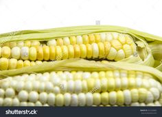 Find Front Defocus Corn Behide Fesh Corn stock images in HD and millions of other royalty-free stock photos, illustrations and vectors in the Shutterstock collection. Corn Crop, Sweet Corn, Photo Editing, Environment, Scene, Plant, Outdoors, Organic, Carnelian