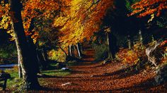 Wallpaper Wallpapere De Octombrie Desktop, Country Roads, Park, Plants, Outdoor, Wallpapers, Outdoors, Wall Papers, Parks