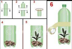 A U.T.I. ou C.T.I. é um método de tratamento e recuperação de plantas que é comumente adotado por orquidófilos. Inclusive, existem orquidários em várias partes do Brasil que ofe