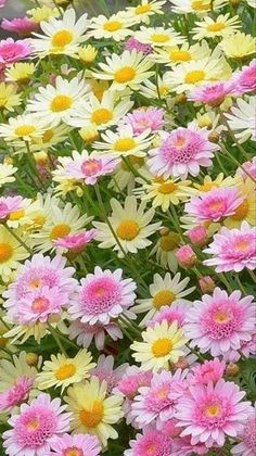 pink and yellow flowers Flowers Nature, Exotic Flowers, Amazing Flowers, Yellow Flowers, Spring Flowers, Wild Flowers, Beautiful Flowers, Pink Yellow, Colorful Flowers