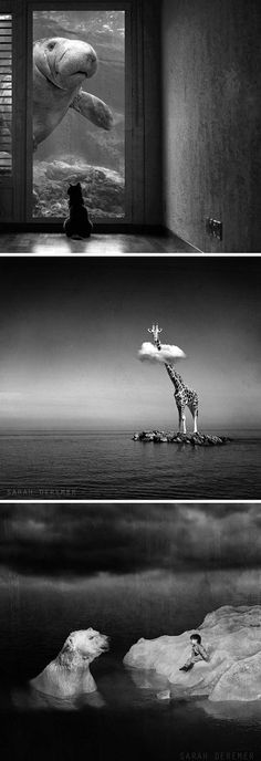Surreal photo manipulations by Sarah DeRemer  I love the use of wildlife in these surreal images.
