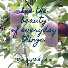 """""""See the beauty of everyday things. #MondayMotivation"""""""