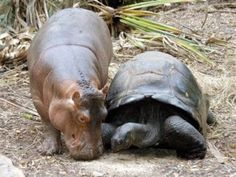 Image result for unlikely  friendships people