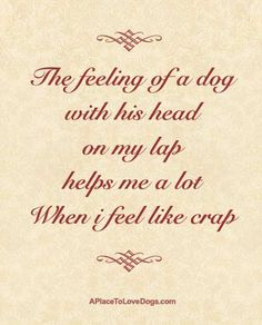 the feeling of a dog...