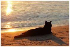 ...et le soir venu, il profitait des rayons du soleil couchant avant d'aller lui aussi prendre un peu de repos.