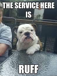 Resultado de imagen para funny english bulldog