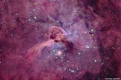 Nebolosa purpura