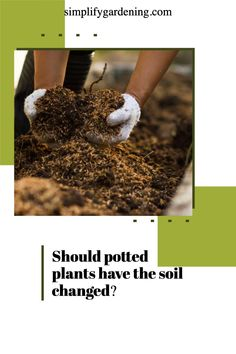 First things first: repotting does not necessarily mean changing a plant's current planter, but rather, changing its soil or potting mix. Fresh soil means new nutrients. Read more // how to decorate with plants // using plants // plants for outdoor pots // herb plants // bedroom plants // #outside plants in pots #outside potted plants #plant tips Vegetable Garden Soil, Garden Pots, Herb Plants, Potted Plants, Fast Growing Plants, Outdoor Pots, Organic Soil, Gardening Hacks, Bedroom Plants