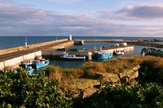 Official Seahouses tourist information and visitor guide for where to stay and the boat trips to the Farne Islands. Seaside Towns, Places Ive Been, Things To Do, Beautiful, Things To Make