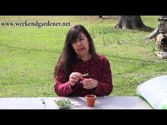 Learn How to Start Cutting of Marjoram from the Produce Isle