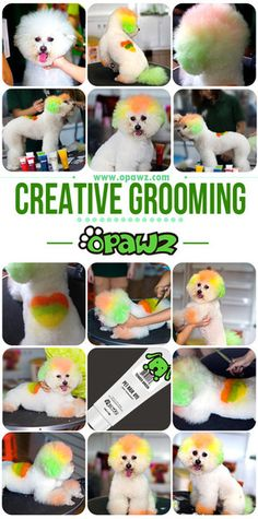 Creative grooming with OPAWZ Pet Hair Dyes Creative Grooming from OPAWZView Post