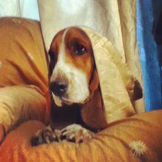 Bellisima, Pets, Animals And Pets