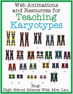 My students have always been fascinated with karyotypes. I usually teach about karyotypes right after long unit on cellular respiration and photosynthesis, right before I get into mitosis and meiosi Biology Classroom, Biology Teacher, Teaching Biology, Science Biology, Science Education, Life Science, Ap Biology, Biology Experiments, Forensic Science