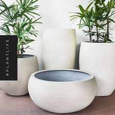 What plants would you put in these pots? FeatherStone large lightweight planters.