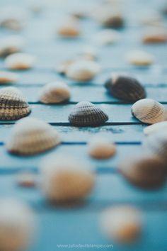 beach seashells photography