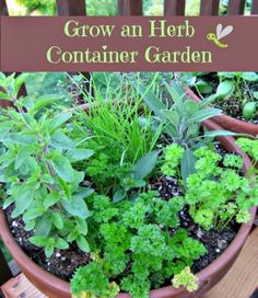 REALLY INFORMATIVE Herb container gardens are one of my favorite ways to bring herbs easily into the kitchen when cooking. Whether you grow an herb garden on the patio or a couple pots on the windowsill, growing herbs is one of those essenti. Diy Garden, Garden Pots, Vegetable Garden, Garden Landscaping, Herbs Garden, Flowers Garden, Herb Garden Planter, Herb Planters, Flower Gardening